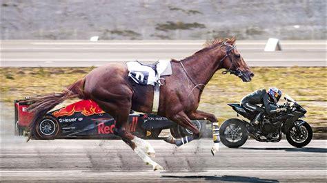 horse fastest breeds