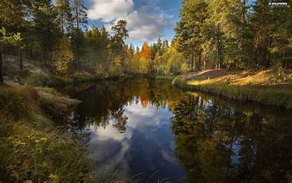Sunny Forest River Reflection Trees Viewes Desktop