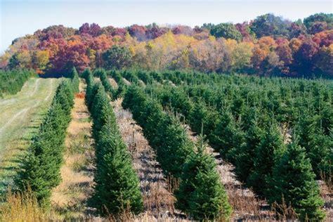 christmas tree farm near me appleron wi wintergreen wisconsin farm flavor