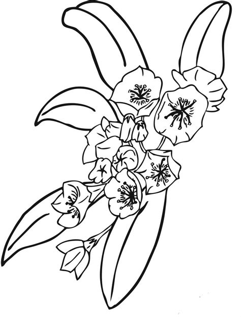 flower color free printable flower coloring pages for best