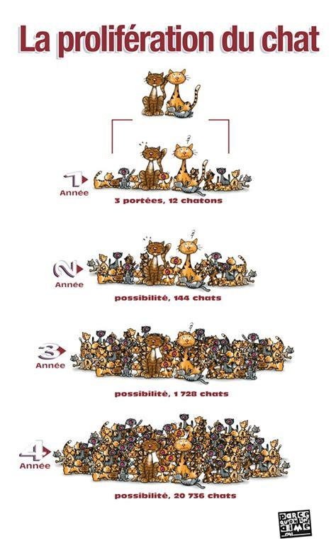 combien de portee par an pour un chat pourquoi faire st 233 riliser chat chats and co