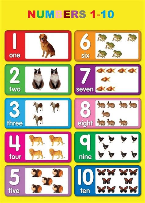 numbers   children kids educational poster chart