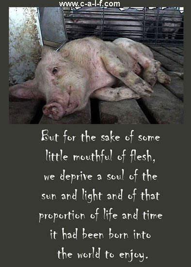 meet  meat     cruelty