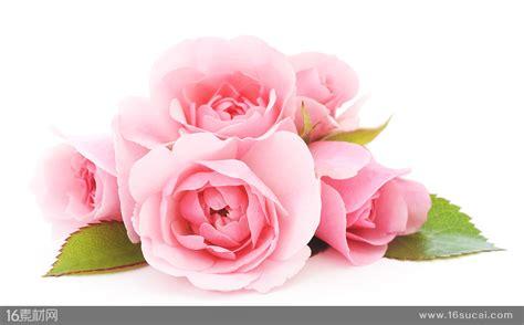 粉色玫瑰花壁画壁纸