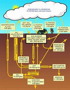 How Do Humans Affect The Nitrogen Cycle