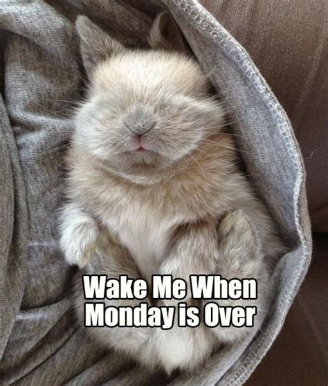 Bunny Meme - 8 best bunny memes and quotes images on pinterest bunnies funny animal pics and adorable animals