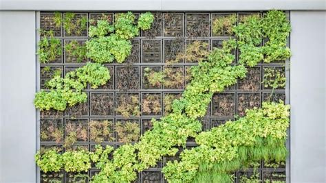 How To Make Your Own Vertical Garden dos and don ts when building your own vertical garden