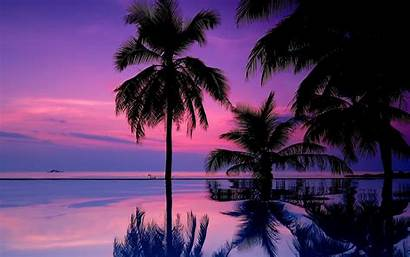 Tropical Screensavers
