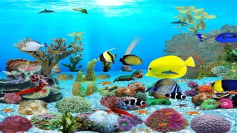Aquarium Wallpaper Animated Free - live aquarium wallpaper vidur net