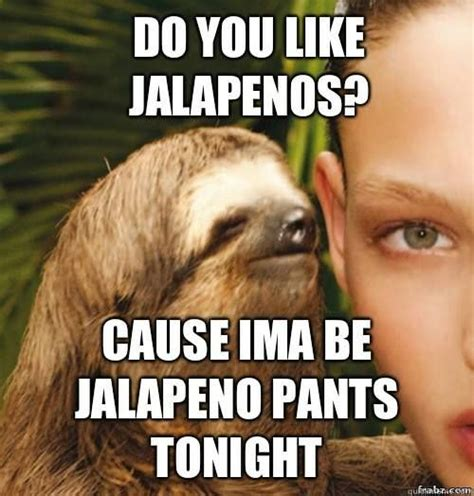 Funny Sexual Memes - 13 best dirty sloth images on pinterest