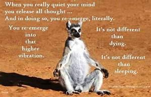 *Abraham-Hicks ... Cute Lemur Quotes