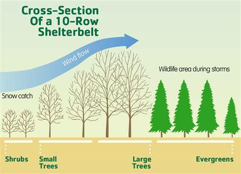creating   shelterbelt myfarmlifecom