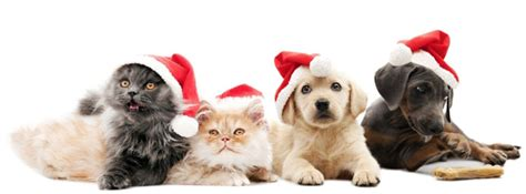 holiday safety for pets new perth animal hospital