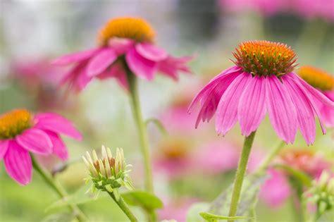 mahoney s garden center late summer bloomers