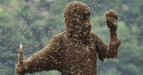 swarm  angry bees   video ebaums world