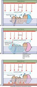 Mechanisms Of Heat Loss  Gain In Infants During Delivery