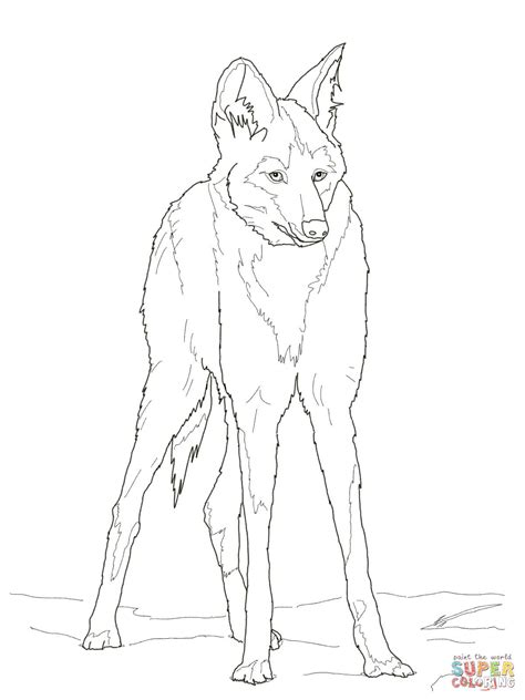 reddish maned wolf coloring page  printable coloring pages