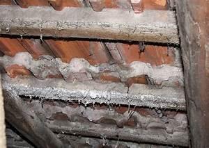 Folie Für Dach : dach sanierung 09 ziegeldachsanierung salpeter an der dachlattung m rtel bl ht aus ~ Whattoseeinmadrid.com Haus und Dekorationen