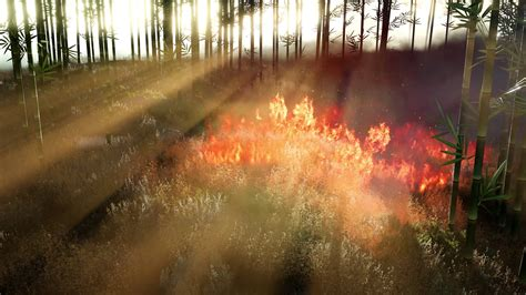 Wind Blowing On A Flaming Bamboo Trees During A Forest