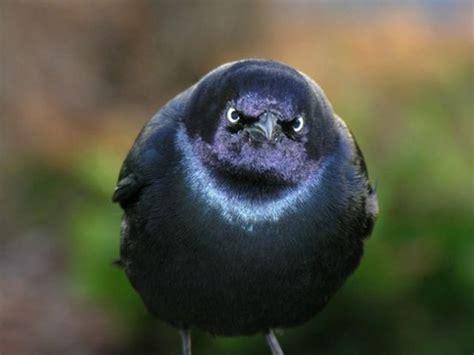 real life angry birds  pics funnycom
