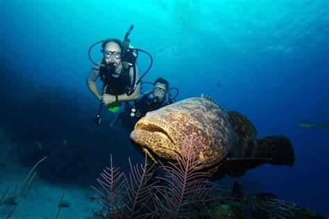 grouper goliath catch 800 biggest pound they fishermen them orlando reg fl