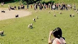 Running Of The Pugs