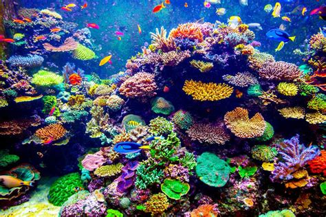 coral reef color why did these colorful coral reefs shock scientists