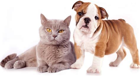 Selfish Cat & Loyal Dog Funniest Wallpapers Hd