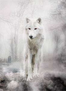 "King Jon Snow on Twitter: ""Best direwolf ever #Ghost ..."