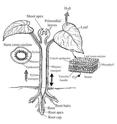 tools resources biology cheat sheet test prep