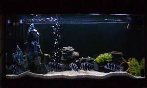 Optimale Aquarium Temperatur : tank examples ac 39 s frontosa tank ~ Yasmunasinghe.com Haus und Dekorationen