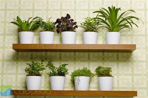 hidroponik tanaman cocok tanam
