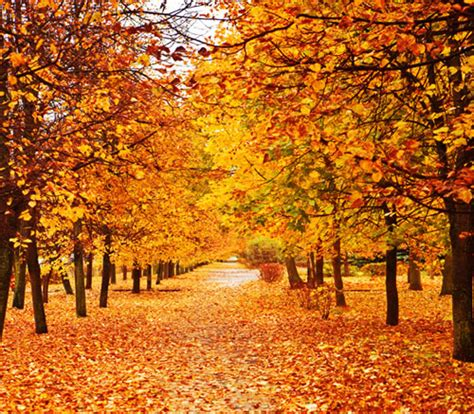 Fall Backgrounds Realistic 2012 extended photo realistics c