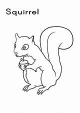 Squirrel Coloring Pages A4 Colouring Printable Squirrels Colour Draw Outline Animal Line Printing Sheet Poster Tree Fact Animals Wildlife sketch template