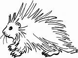 Coloring Porcupine Printable Educative Ages Educativeprintable Fun Fin sketch template
