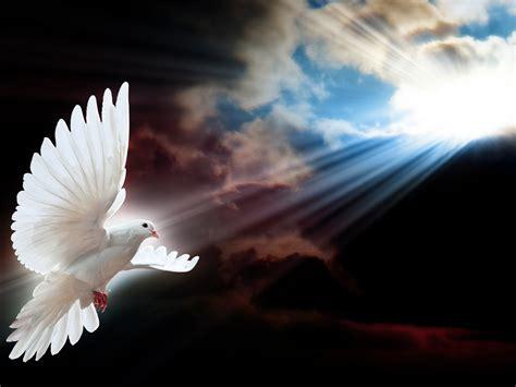 white dove symbol  freedom seepage sochevite rays