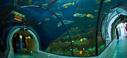 bureau vall馥 la rochelle aquarium valence site officiel 28 images ecole 233 l 233 mentaire aquarium la rochelle site officiel quot disco m 233 duses quot 224 l