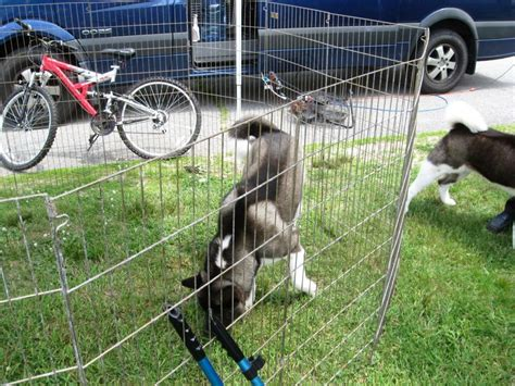 temporary dog fence ideas   type easy dog fence roy