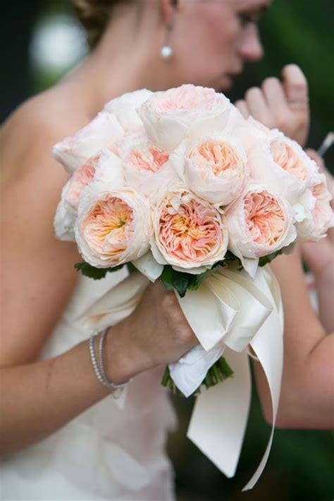 17 Best Ideas About Juliet Garden Rose On Pinterest