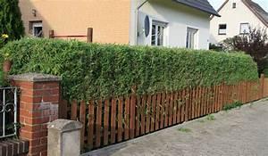 Wie Schnell Wächst Bambus : bambus pflanzenshop bambus als gr ner sichtschutz ~ Frokenaadalensverden.com Haus und Dekorationen