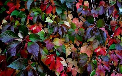 Colorful Leaves Leave Wallpapers Lovely Autumn Desktop