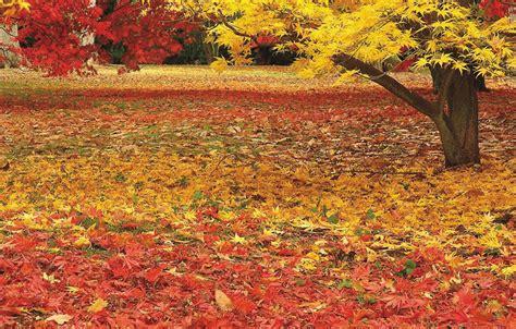 garden autumn designing an autumn garden autumn colour autumn plants design