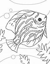 Fish Coloring Pages Discus Aquarium Colouring Printable Sheets Drawing Adult Sheet Animals Animal Drawings Getcolorings Google sketch template