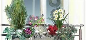 Plantes D Hiver Extérieur Balcon : plante pour balcon hiver pivoine etc ~ Nature-et-papiers.com Idées de Décoration