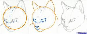 how to draw a cat face step by step | How to Draw a Cat ...