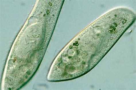 lab practical  biology   lee  texas