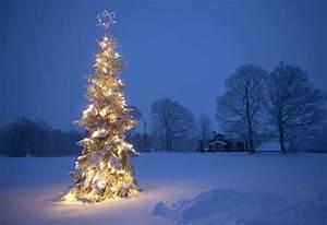 Outdoor, Christmas, Tree