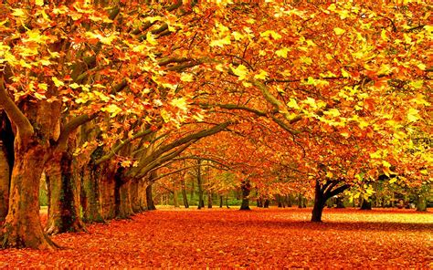 fall trees 2016 first day of fall quotes 20 best autumn sayings leaf quotes northbridge times