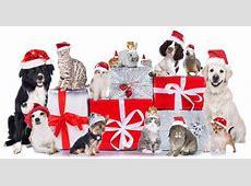 Animal Adoption Event – We need you! Piney Woods News