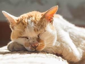 Katze Kotzt Viel : alte katze ab wann gelten katzen als senioren ~ Frokenaadalensverden.com Haus und Dekorationen